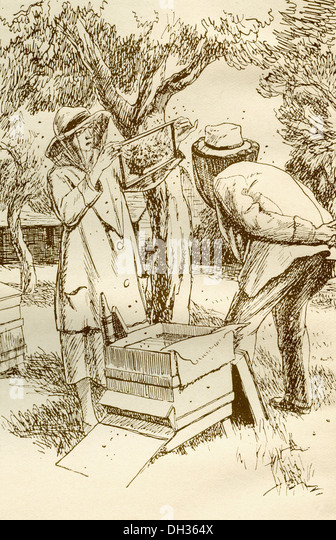 Rural beekeeping in the early twentieth century. - Stock Image