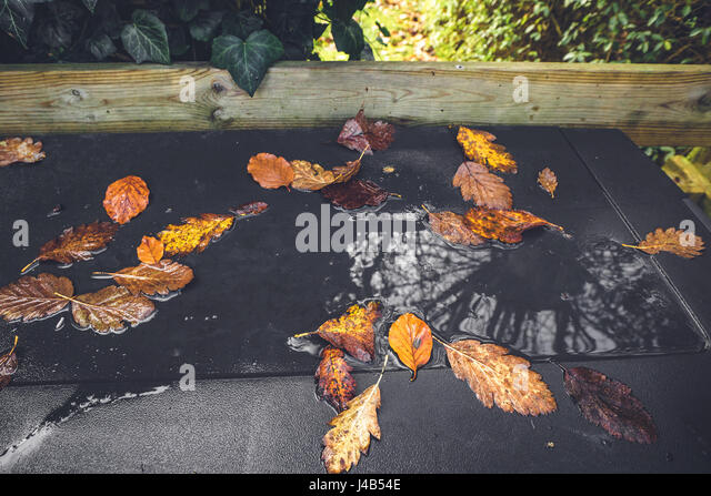 Autumn leaves in a puddle after the rain with leaves in autumn colors in water in the fall in october - Stock Image