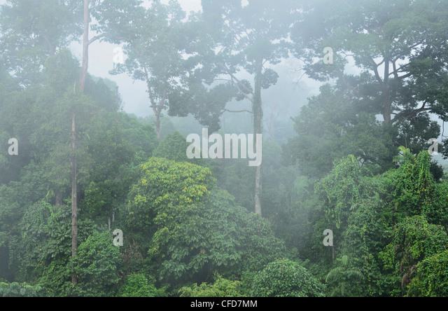 Rainforest, Sepilok Rainforest Discovery Center, Sabah, Borneo, Malaysia, Southeast Asia, Asia - Stock Image