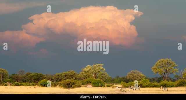 Hwange National Park Zimbabwe Africa - Stock Image