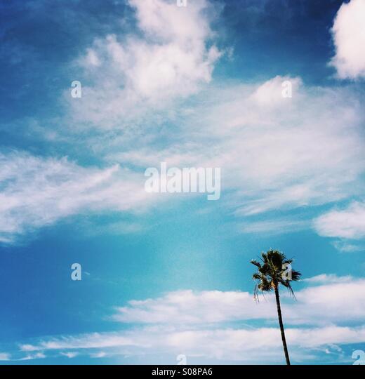 A single Palm tree and clouds Manhattan beach, California USA. - Stock Image