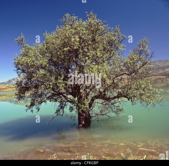 Lake of andalucia stock photos lake of andalucia stock for What to plant under olive trees