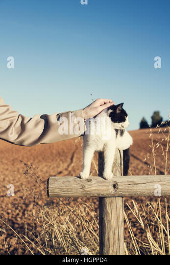 man's hand caring a cat - Stock Image