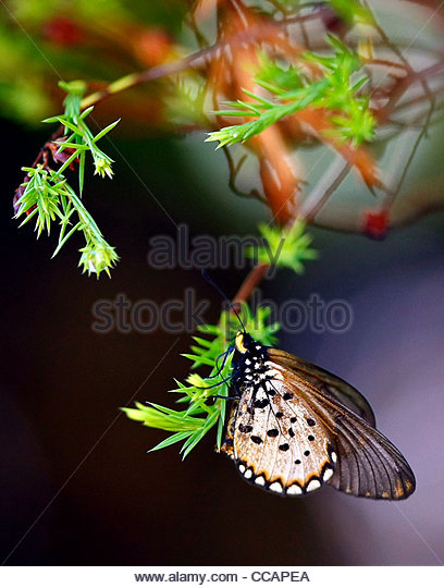 Butterfly world stock photos butterfly world stock - Butterfly world com table tennis ...