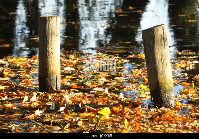 Wooden Planks with colorful Autumn Leaves at River Wuemme, Fischerhude, Lower-Saxony, Germany, Europe - Stock-Bilder