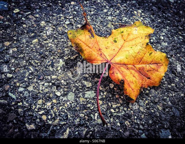Autumm leaf on asphalt - Stock Image