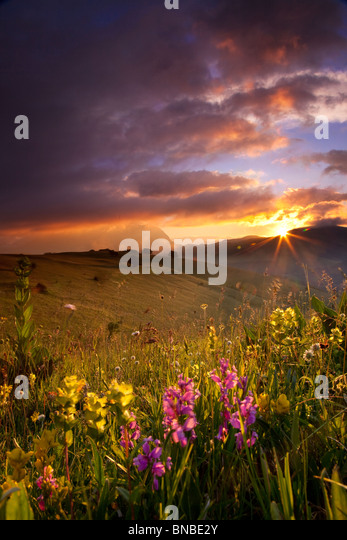 Wildflowers at sunrise in the Monti Sibillini National Park, Umbria Italy - Stock-Bilder