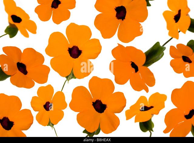 Photomontage of orange flowers - Stock Image
