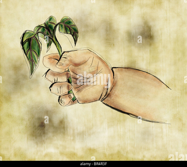 A babys hand holding a sprouting plant - Stock Image