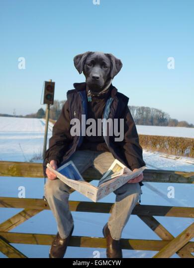 unusual, strange, photoshop, animal metamorthis, photoshop manipulation, animal, creature, artistic, creative, - Stock Image
