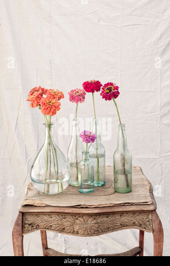 Still Life Photography of Zinnia flowers. - Stock Image