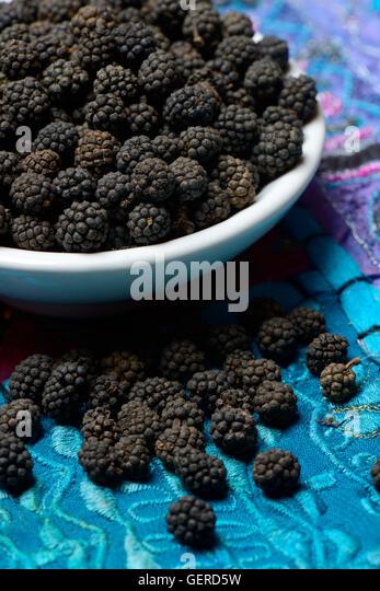 Wilder Assam-Pfeffer in Schale, Assam, Indien - Stock-Bilder