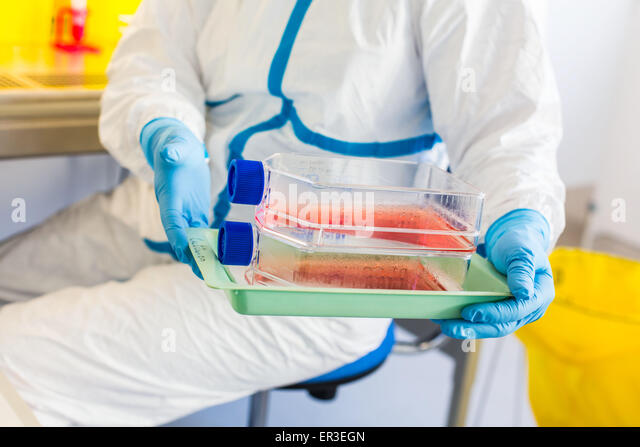 Cells culture examination, manipulations in P3 laboratory, Biology and Research Center in University Hospital Health, - Stock-Bilder