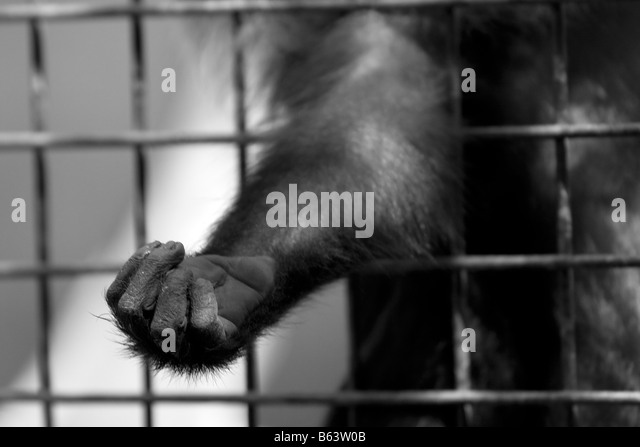 Monkey s hand through the cage - Stock Image