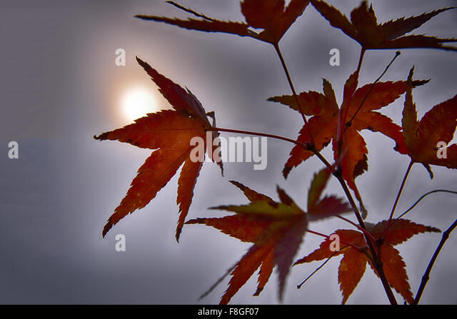 Life reaching for the sun - Stock Image