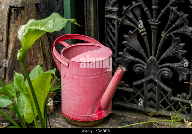 pink rustic metal watering can iron ornate wall background nostalgic style - Stock Image