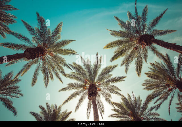 palm trees, beverly hills,los angeles,rodeo drive,summer,vintage,sky,nature,natural,crown-like - Stock Image