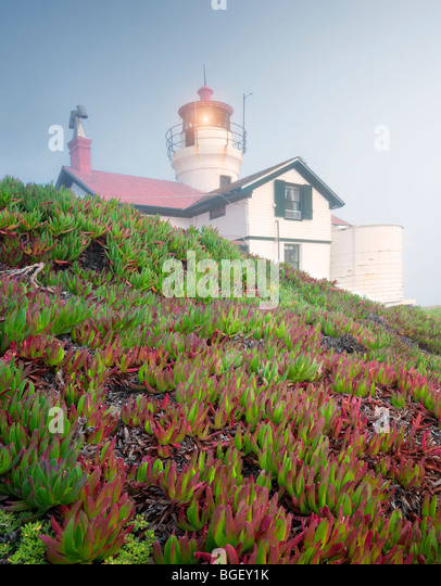 Battery Point Lighthouse with ice plants and fog. California - Stock-Bilder