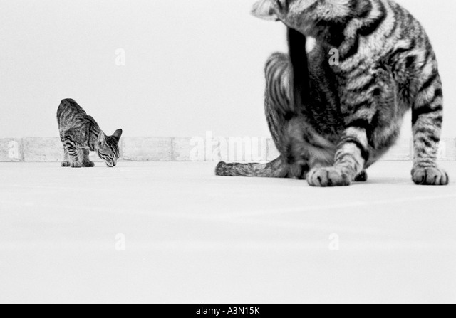 Scratching cats - Stock Image