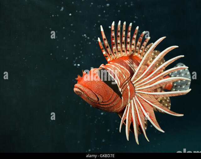 Wooden lionfish in a pool in Virginia Beach, Virginia - Stock Image