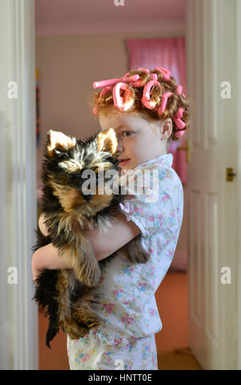 Girl in hair curlers holding a puppy - Stock Image