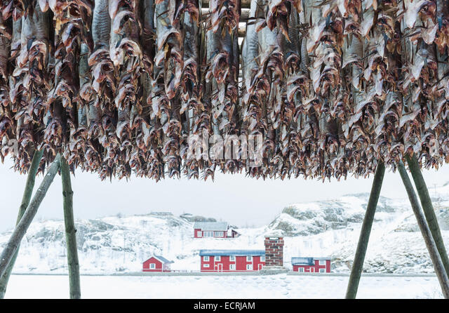 Stockfish hanging in front of a building in winter - Stock Image