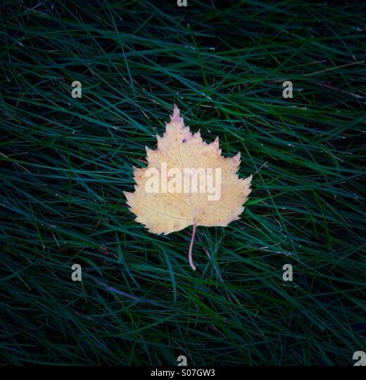 A single leaf laying on grass. - Stock Image