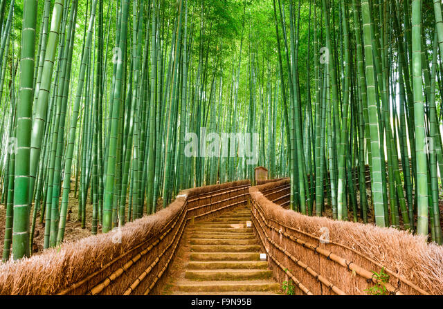 Kyoto, Japan at the Bamboo Forest. - Stock Image