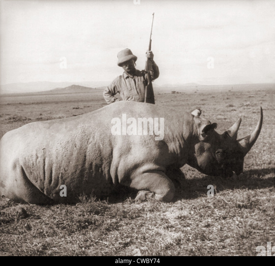Former President, Theodore Roosevelt, in Africa standing behind dead rhino and holding rifle ca. 1909. - Stock Image