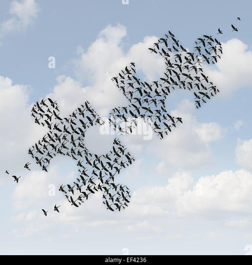 Flying birds puzzle as a business concept for group strategy as two flocks of geese shaped as jigsaw puzzle pieces - Stock-Bilder