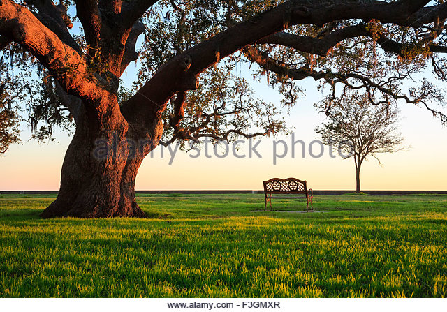 A grand oak tree overhangs a lone bench at sunset, Mandeville, Louisiana, United States - Stock Image