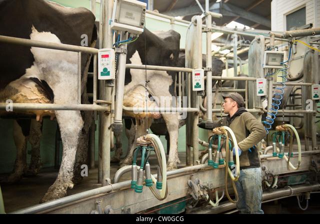 dairy cow machine