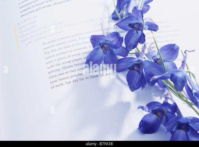 Delphinium on book - Stock Image