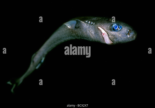 Querformat Stock Photos & Querformat Stock Images - Alamy