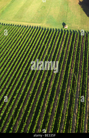 aerial view from hot air balloon looking down over vineyards in the Dordoigne, France - Stock Image