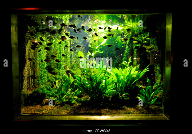 Us marine tank stock photos us marine tank stock images for Small fish tanks
