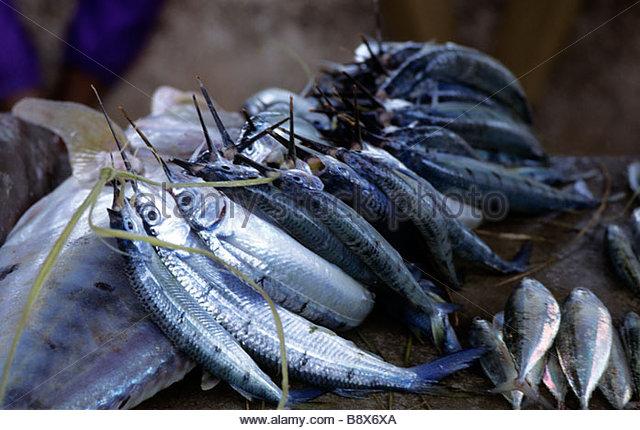 tanzanian forget how to fish