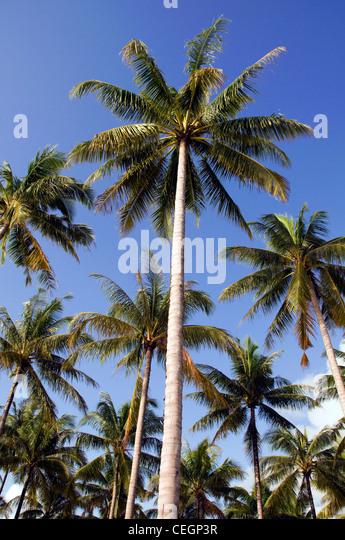 Club Coconut West Palm Beach