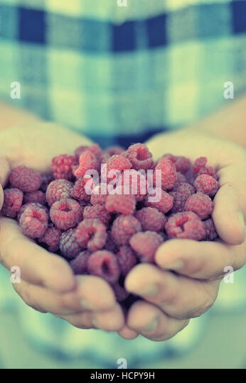 Raspberry in palm - Stock Image