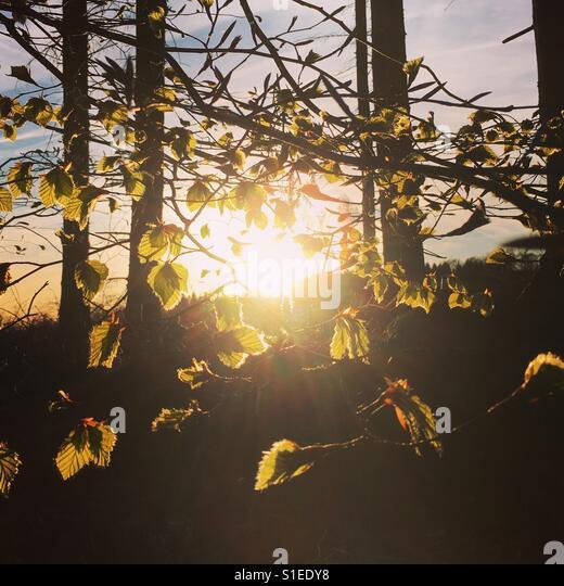 Springtime - Stock-Bilder