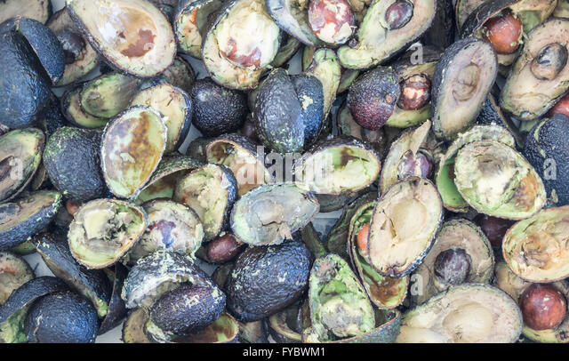 Box of over ripe Avocados in supermarket rubbish yard. Food waste concept image. - Stock Image