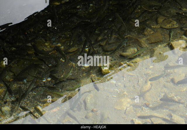 Panjshir province stock photos panjshir province stock for Keller fish farms