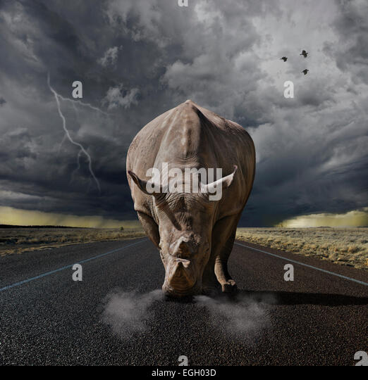 Large rhino ready to charge - Stock Image