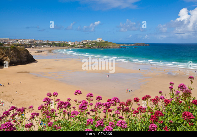 Newquay Beach with valerian in foreground, Cornwall, England, United Kingdom, Europe - Stock Image