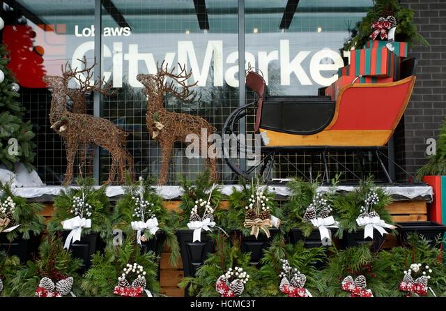Sleigh Reindeer Stock Photos & Sleigh Reindeer Stock