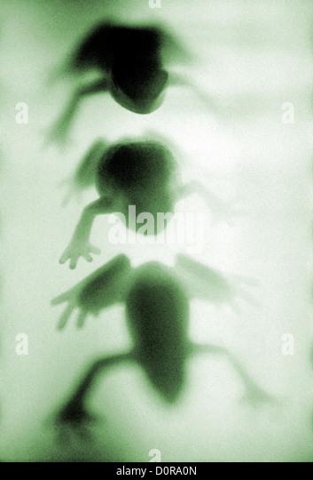 three frogs green, figurines ©mak - Stock Image