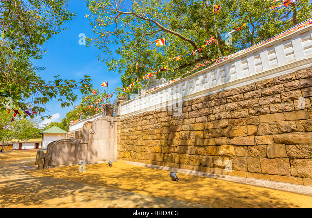West steps of Jaya Sri Maha Bodhi tree compound and sacred fig tree above at ancient Anuradhapura capitol in Sri - Stock Image