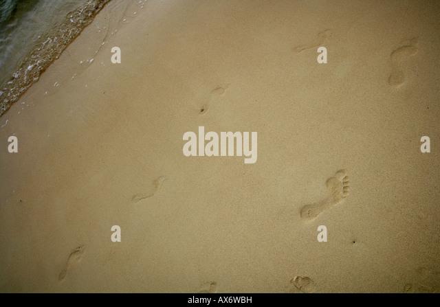 tracks at the beach - Stock Image