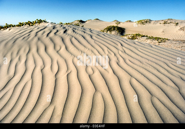 Blowing winds create artistic ripples in these sand dunes on Magdalena Island in the Pacific Ocean off the west - Stock-Bilder