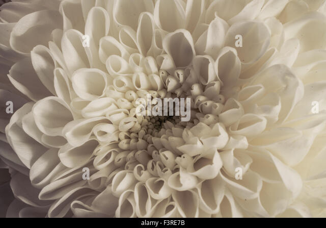 A close up shot of flowers taken in autumn. - Stock Image